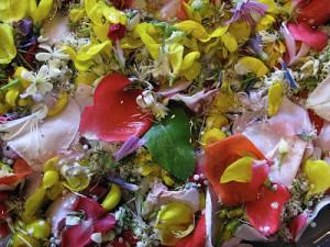 fiori san giovanni